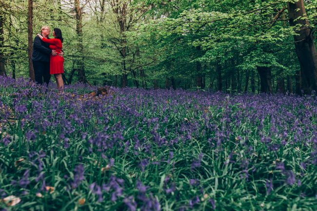 Bluebell wood Hitchin, engagement shoot