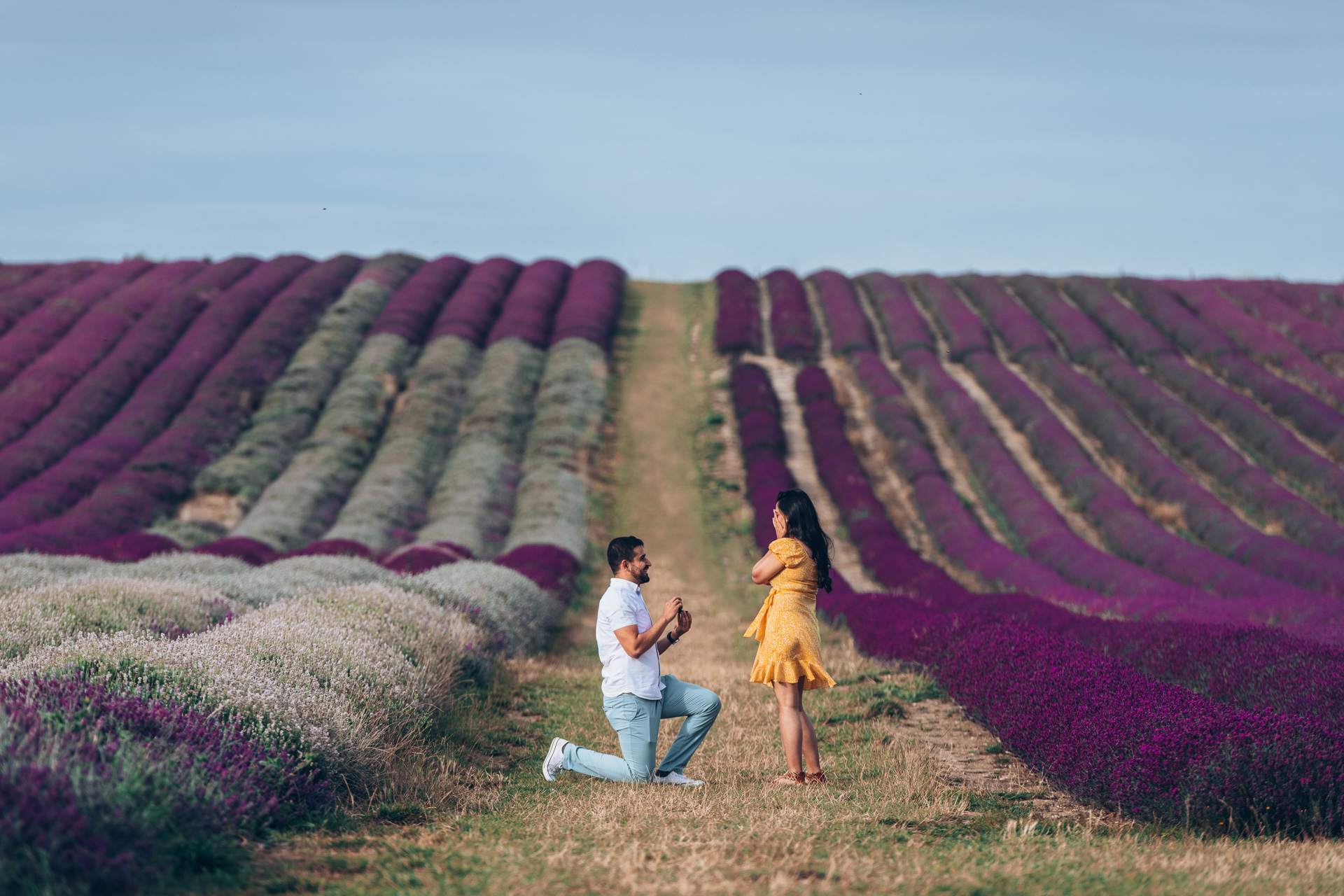 Proposal at Hitchin Lavender